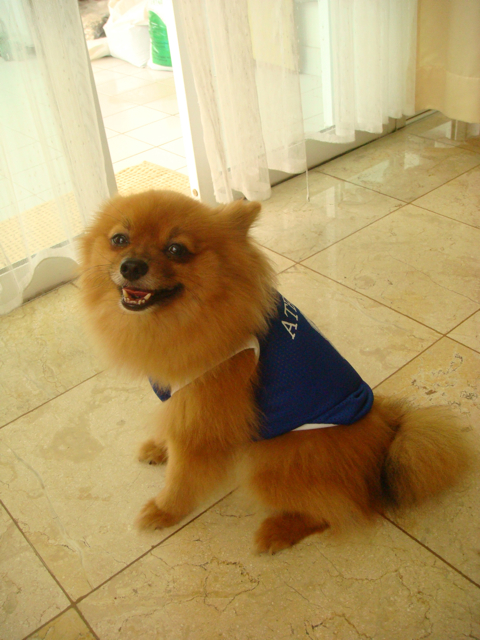 Diplo Dog's Ateneo Jersey