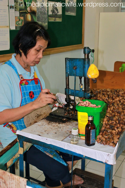 Cashew processing demo at Sri Bhurapha Orchid Phuket Cashew factory store