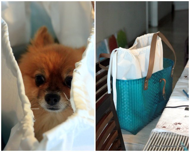 DiploDog's DIY Doggie Bag liner-1
