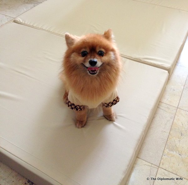 3-Hanidas Collection custom folding mattress-002