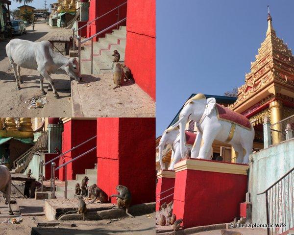 08-Mount Popa Taung Kalat Monastery bagan myanmar-007
