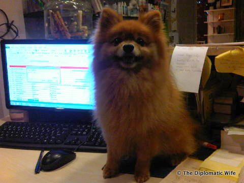 DiploDog receptionist at Animal Clinic 1
