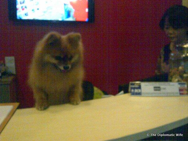 DiploDog receptionist at Animal Clinic 2