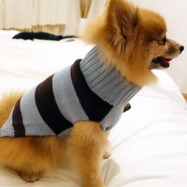 Diplo-Dog-TK-maxx-wool-sweater