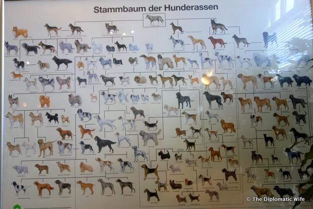 diplo dog veterinary clinic berlin-003