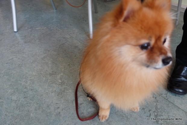 diplo dog veterinary clinic berlin