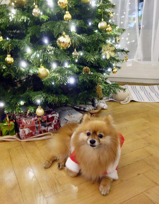 diplo-dog-santa-suit