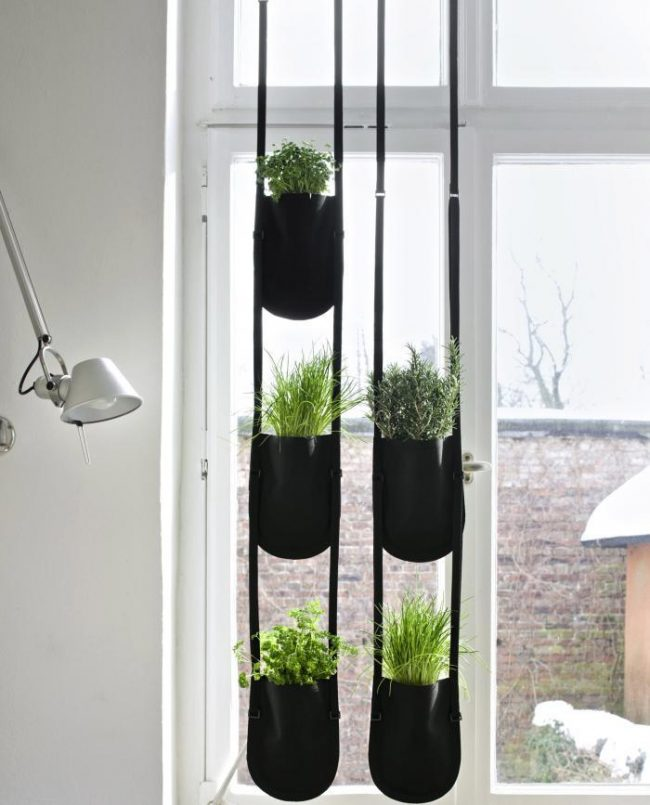 700_hanging-urban-garden-plant-in-situ