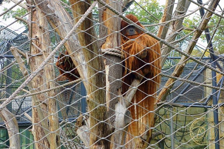 thediplomaticwife-berlin-zoo-005