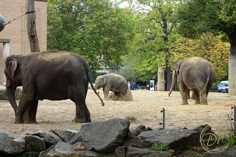 thediplomaticwife-berlin-zoo-014
