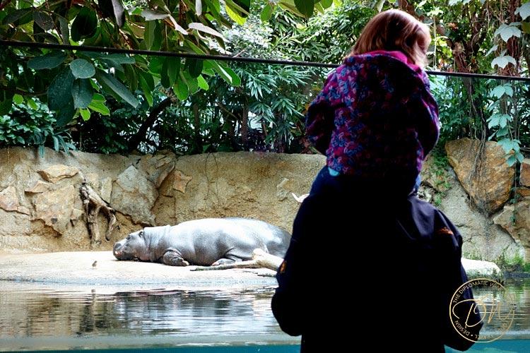 thediplomaticwife-berlin-zoo-017