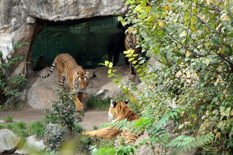 thediplomaticwife-berlin-zoo